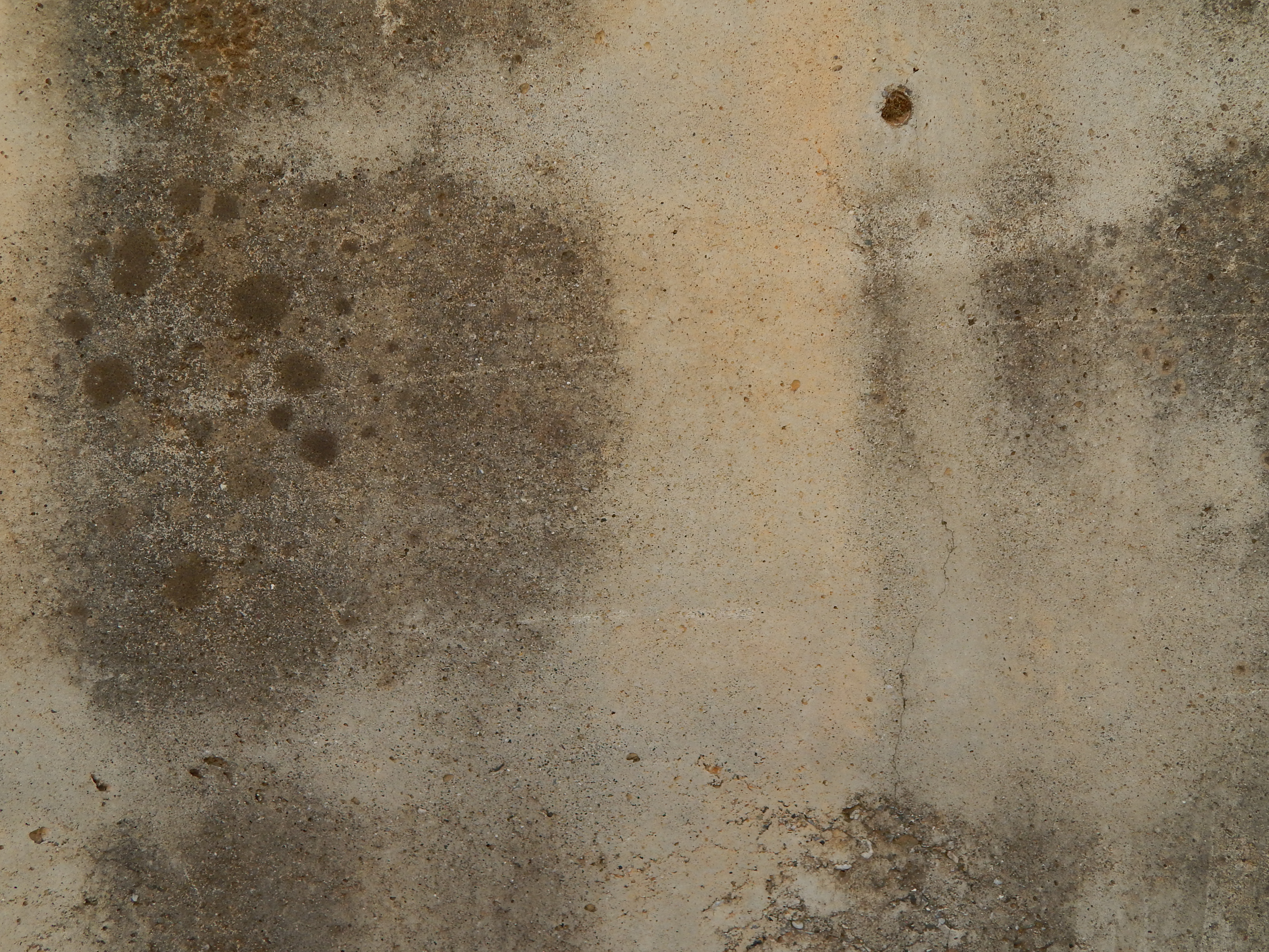 Mold Removal Services in Pell City, AL